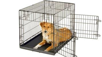 Hunde bur med 2 låger 76 x 53 x 58 centimeter