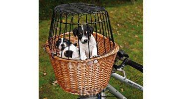 Cykelkurv i pileflet med gitter til hundetransport